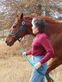 OTTB - Secret is learning dressage with his mom, Marianne, in Aiken, SC