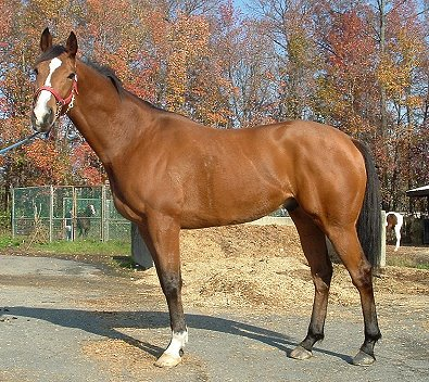 OTTB - Southern Legacy at the track in November 2006