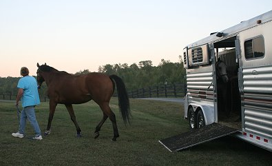 Southern Legacy arrives at his new home in north Georgia near Helen, GA!
