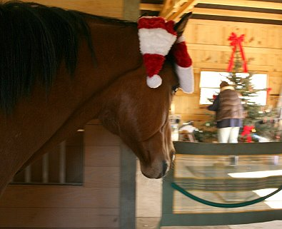 Southern Legacy checks out the gifts under his Christmas tree.