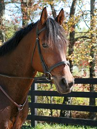 Tuck's St. Aly is a horse for sale at Bits & Bytes Farm.