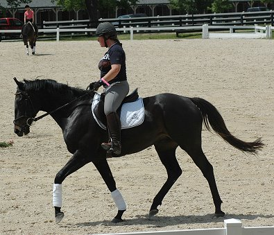 Thoroughbred doing dressage at the KDA show at the Kentucky Horse Park. Wiseguy's Out - June 2006