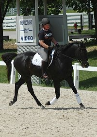 Exracer - Wiseguy's Out at the Kentucky Horse Park at a dressage show.