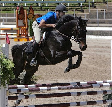Wiseguy's Out is a successful hunter/jumper looking for a brave new partner to compete with! July 2008
