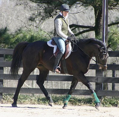 Wiseguy's Out in training with his aunt Lauren in Janaury 2005.