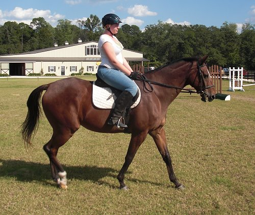 Artic Vic - Thoroughbred horse for sale.