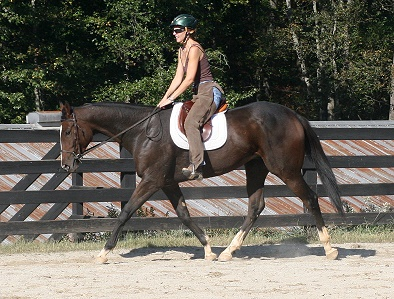 Aly's Alpha Boy is well behaved and easy to ride.