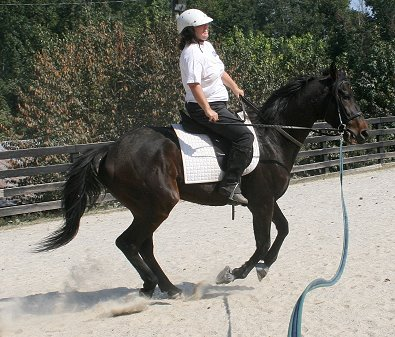 "Lynn's Vision aka ""Bubba"" gave his mom Melanie Eberhardt her first canter today. October 5, 2008"