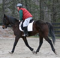 A horse with a relaxed back is balanced and can step under with a bigger and more comfortable stride.