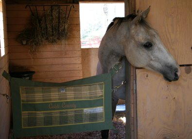 Ex-racer, Cobb County enjoys his big new stall with his name embroidered on his stall guard.