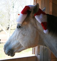 OTTB Cobb County is dressed to greet Santa. December 23, 2007