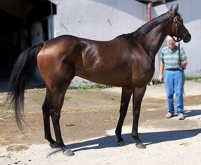 K O River Crossing was a Prospect Horse For Sale in July 2007