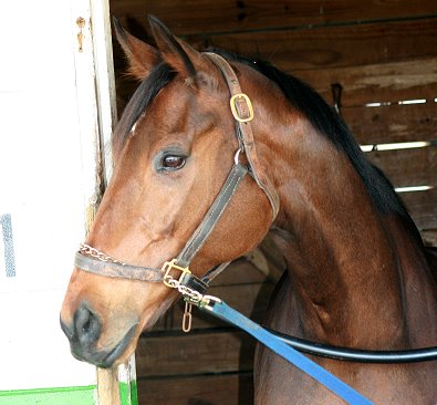 """Lightbulb"" is one of our new Prospect Horses. He has the ""Look of Eagles."""