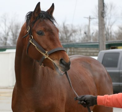 Mighty Quiet was a Prospect Horse For Sale in February 2007