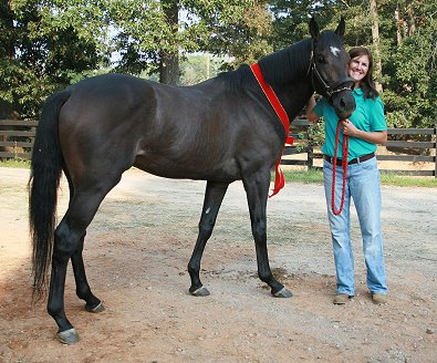 "OTTB and former Prospect Horse for sale - Stevie Loverboy has a new mom! Congratulations to our ""Friend"" Missy Miller. Stevie Loverboy will be boarding at Bits & Bytes Farm. September 5, 2007"