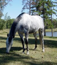 "OTTB - ""Blue"" likes the big pasture and pond at his new home in Alabama."