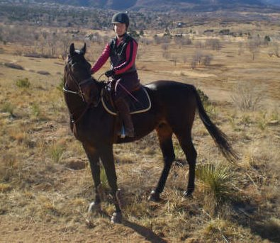 OTTB Fast Commander on his first trail ride in Colorado.