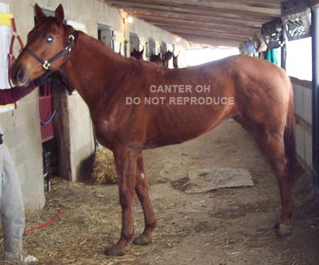 Please go to the CANTER Web site if you can help save this horse.