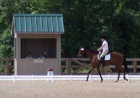 Artic Vic finished fifth at his first dressage show!