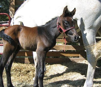 Artrageous' first foal is a colt! March 6, 2008
