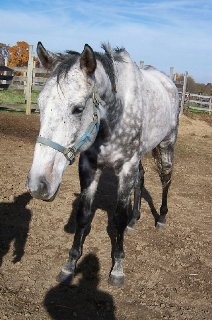 Bad Hombre was one our our 25 Special Horses on our Prospect Horses for Sale page.