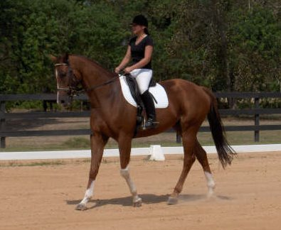 OTTB - Cold Cash makes his dressage debut!