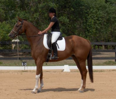 Ex-racer - Cold Cash is excelling in his new career in dressage.