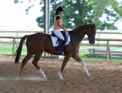 "Emee Ermel - ""Not bad for my 'Internet horse' ""- as people say at the barn!"