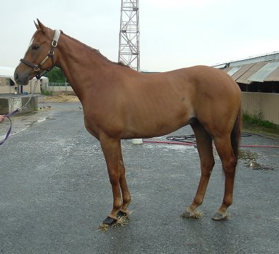D G Dusty was a former Prospect Horse for Sale in June 2006