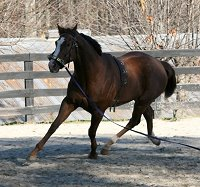 OTTB - Fizzicus learns to lunge with Elizabeth - November 25, 2006