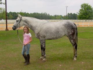 He Named Me Katie is a Thoroughbred broodmare prospect who can be lightly ridden by children.