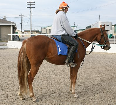 Hollywood Vic was not at all upset about starting his career as a race horse. November 6, 2006