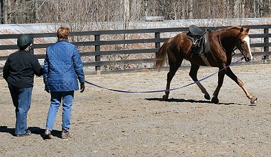 Elizabeth helps new horse owners learn to train their horses.