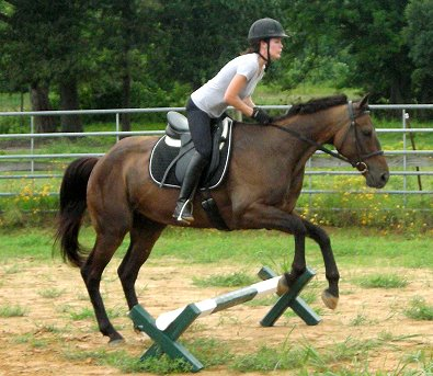 OTTB - Mia Justice is a horse for sale in Little Rock, AR