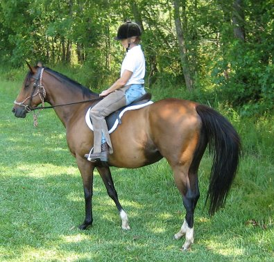 Most Always a Lady - OTTB Trail riding  and fox hunting