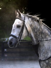 Sing D Song was a former Prospect Horse For Sale who is now an OTTB for resale.
