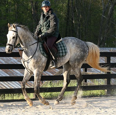 OTTB - Sing D Song is doing extremely well with his training.