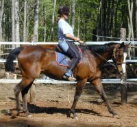 Violet Maewon under saddle - April 2006