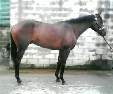 Three year old Thoroughbred gelding. Call for more information.