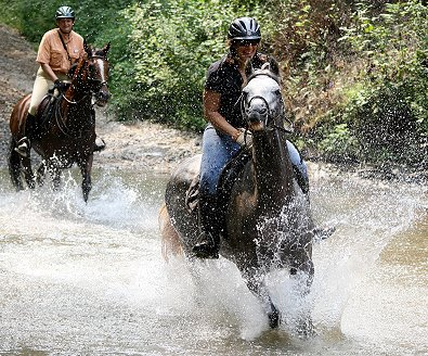 Our newest Thoroughbred Training Note is onTraining Thoroughbreds to Go Through Water.
