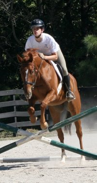 Light Artillery is a Thoroughbred Horse for Sale at Bits & Bytes Farm.