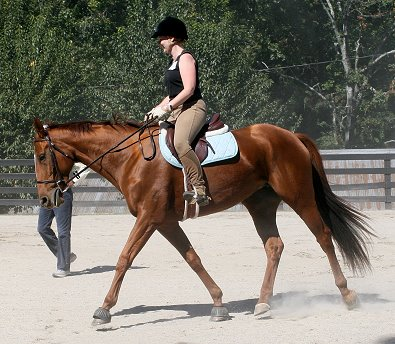Steffie's Hope was a Prospect Horse for Sale. She was purchased by Christy Tucker in January 2005.