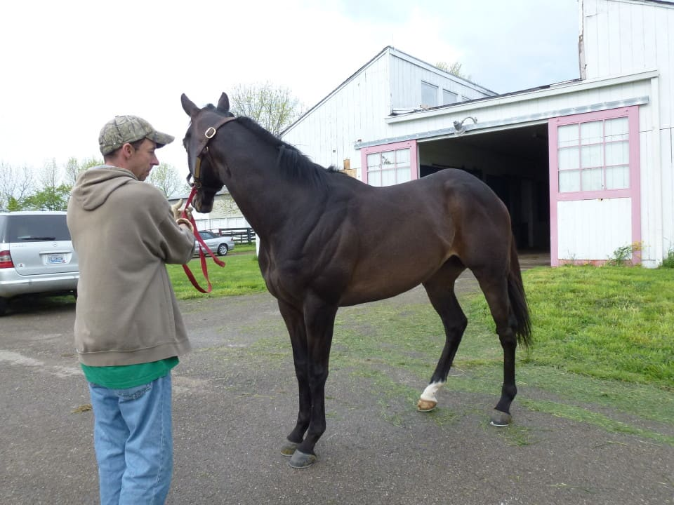 Arctic Point was sold as a Prospect horse in June 2013