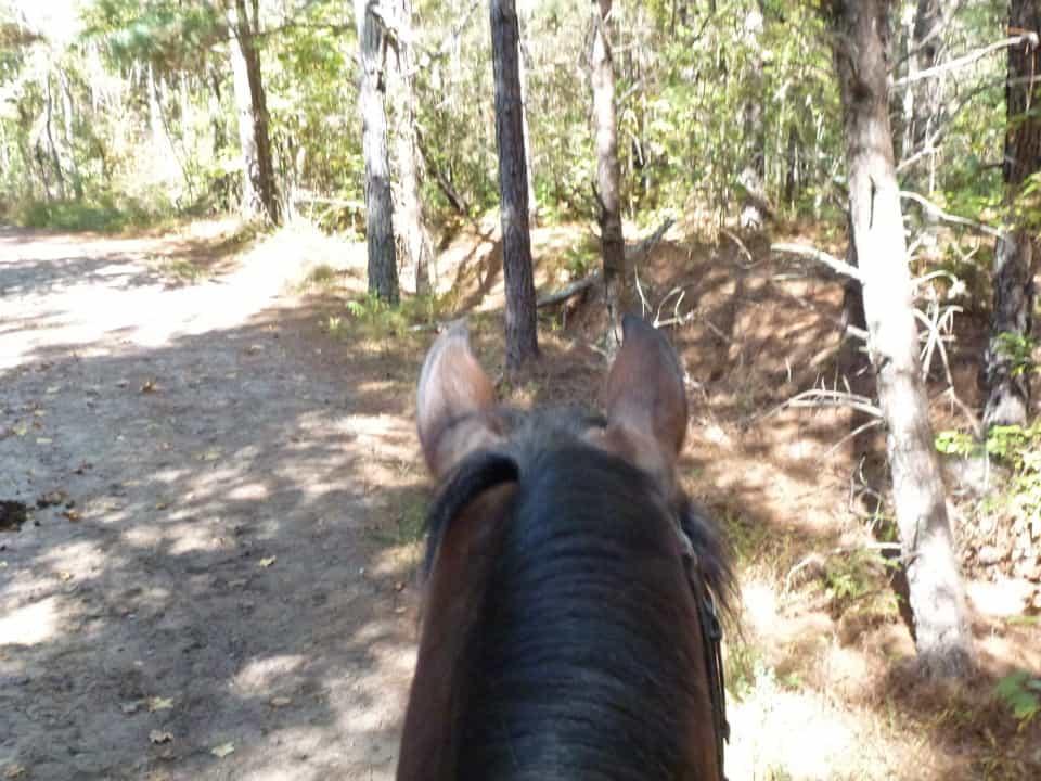 trail-ride-dawson-forest_20121020_006