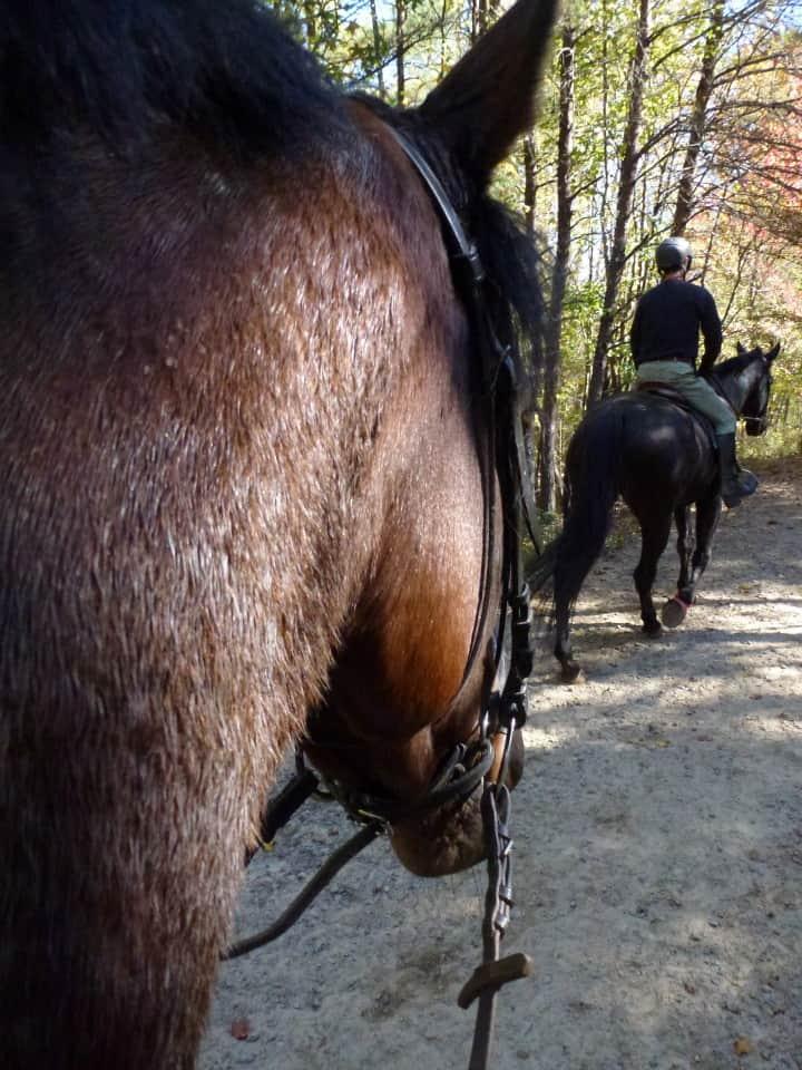 trail-ride-dawson-forest_20121020_069