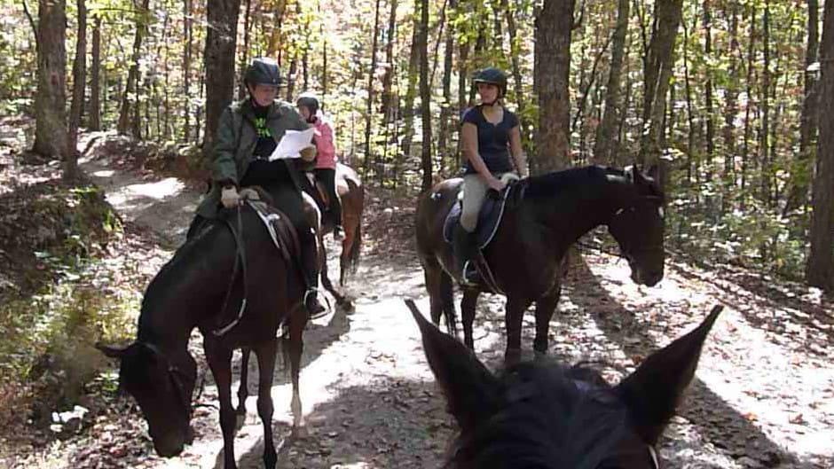 trail-ride-dawson-forest_20121020_091