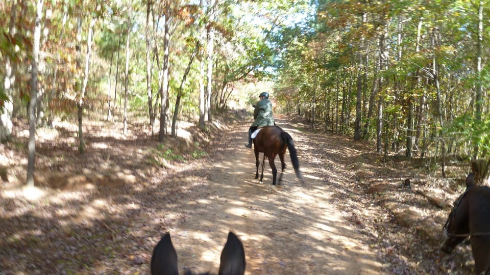 trail-ride-dawson-forest_20121020_113
