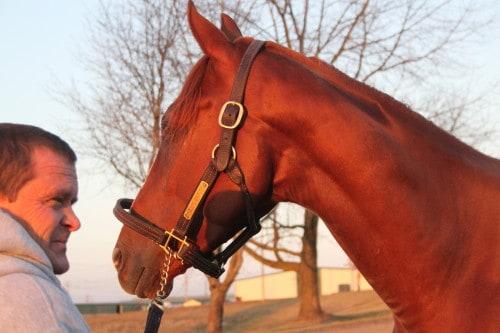 Destin-Thoroughbred horse for sale - chestnut colt
