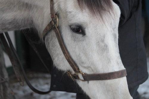 detroit-iron_20110128_003