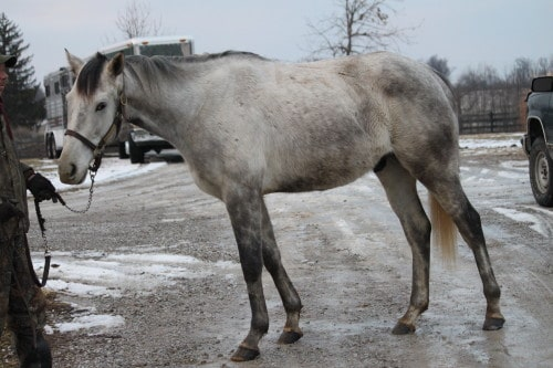detroit-iron_20110128_102